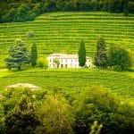 Pourquoi investir dans le domaine viticole ?