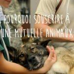 Pourquoi assurer un animal domestique?